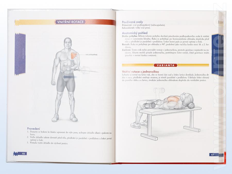 Bodybuilding Anatomie Nick Evans Fotografie